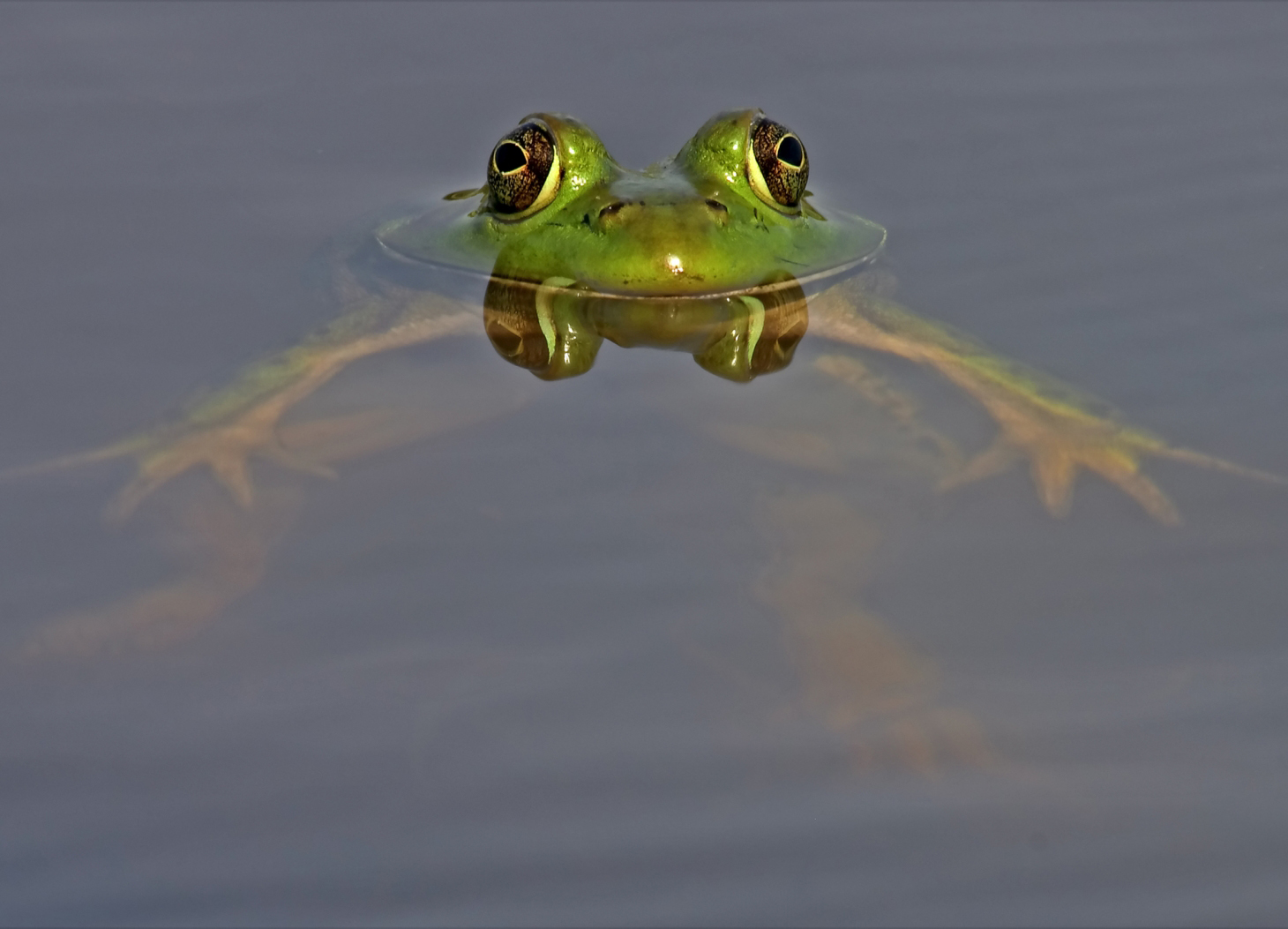 Do Goliath Frogs Live On Land Or In Water 42