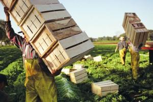 farm worker2