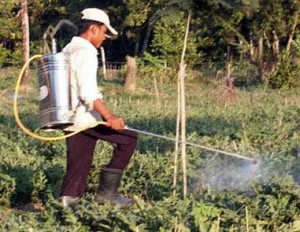 Manual_sprayer_farmworker