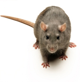 mousepicture