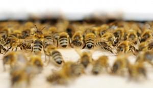 numerousbees