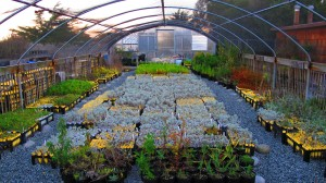 Native Plant Nursery