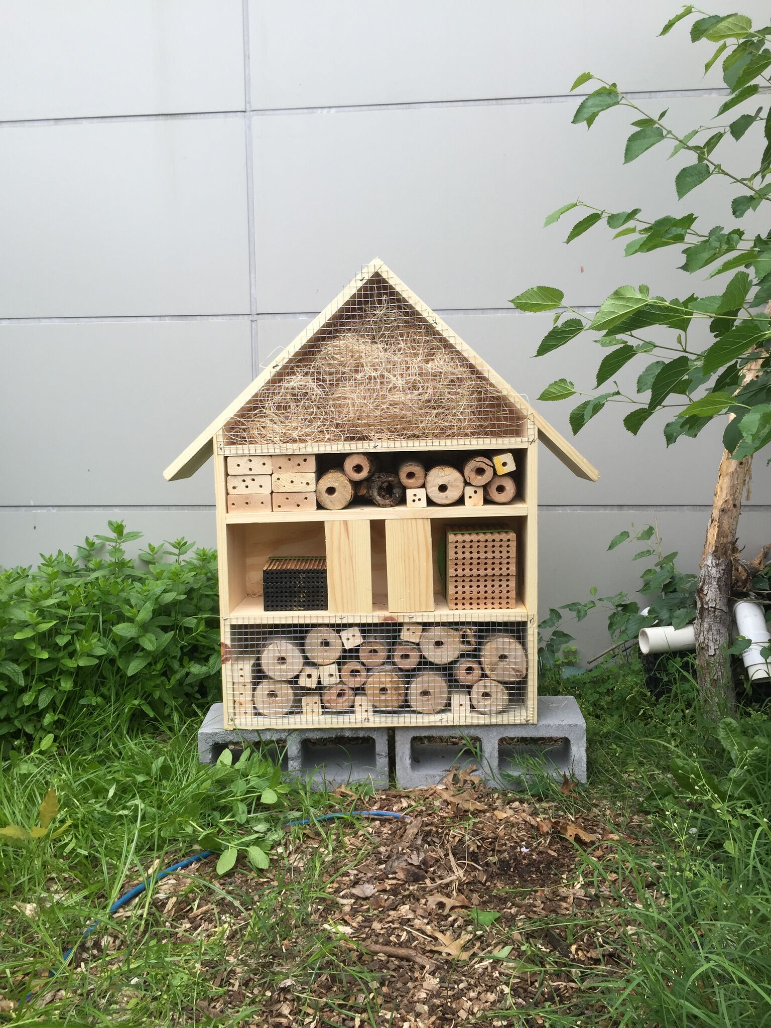 Build your own native bee house beyond pesticides for Build your home