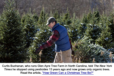 Christmas Trees and Pesticides — Beyond Pesticides