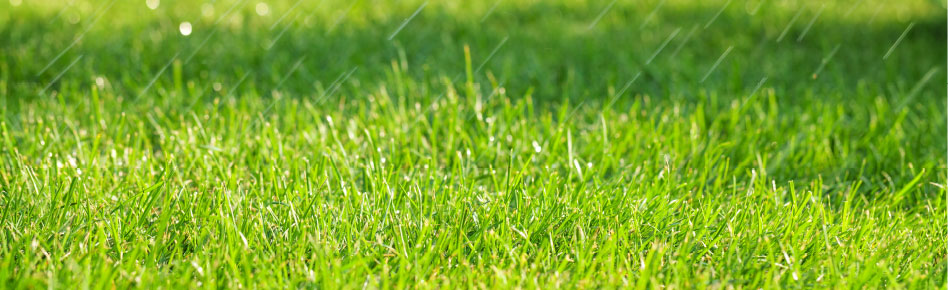 Lawns And Landscapes Beyond Pesticides