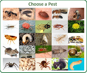 Choose a Pest