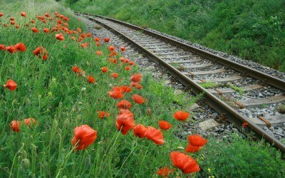 railroad with poppy flowers Stock Photo - 7577656